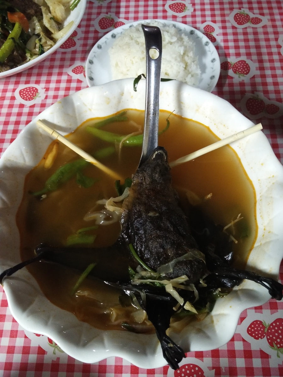 Bat soup dinner Palau Travel